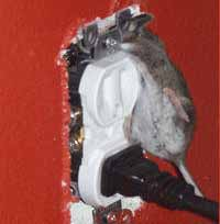 electrical outlet hazard