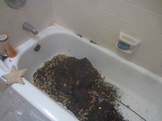 small black ants in bathroom sink carpenter ants in bathroom my web value 25762